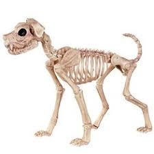 amazon com crazy bonez skeleton cat toys u0026 games halloween
