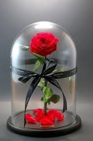 enchanted rose that lasts a year infinite love available for local pickup or local delivery only