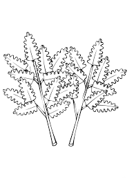 vegetable parsley leaves coloring page flowers vegetable