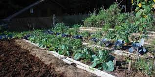 sunny slopes and garden growth approaching your crops from a new
