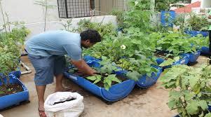 terrace gardening plant care in organic terrace gardening biological research