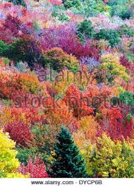 the multicolored leaves of trees during autumn in new usa