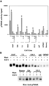 loss of pten expression leading to high akt activation in human
