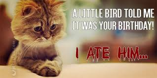 Funny Cat Birthday Meme - joke4fun memes should never name your cat jason