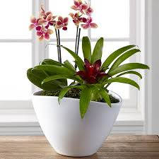 orchid plants the ftd harvest style plant duo by better homes and gardens