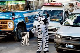 bolivia zebra costumes direct traffic atlantic