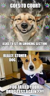 Dog Lawyer Meme - image tagged in lawyer dog stoner dog imgflip