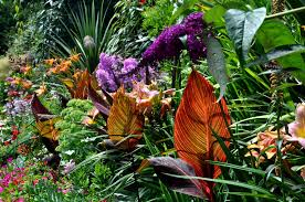 Pictures Of Garden Flowers by Tropical Garden Flowers Ideas Decor Crave