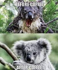 Koala Bear Meme - koala bear meme salad