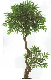 artificial outdoor mini ficus trees