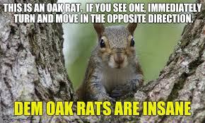 Dramatic Squirrel Meme - squirrel imgflip
