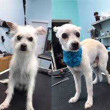 happy tails 102 photos u0026 125 reviews pet groomers 4625 york