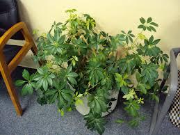 design beautiful indoor plants ideas 23180 modern loversiq