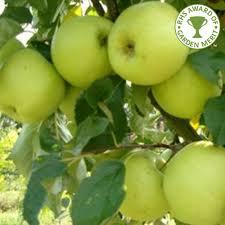 greensleeves apple tree buy apple trees purchase apple fruit trees