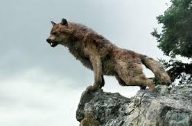 imagenes sorprendentes de lobos crítica de la saga crepúsculo luna nueva