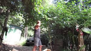 growing kiwi in canada youtube