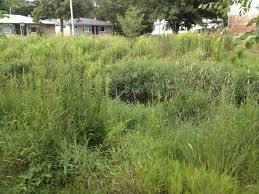 native prairie plants good oak news august 2013