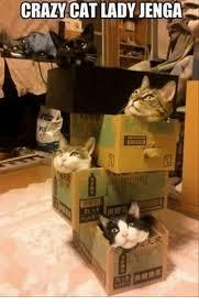 Funny Cat Lady Memes - 25 best memes about cat lady cat lady memes