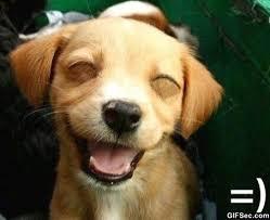 Smile Funny Meme - smile viral viral videos