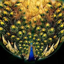 online get cheap decoration wall peacock aliexpress com alibaba