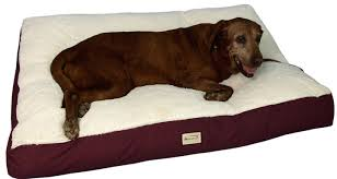 Foam Dog Bed Choose The Best Dog Bed For Large Dogs And Small Dogs Dogsrant
