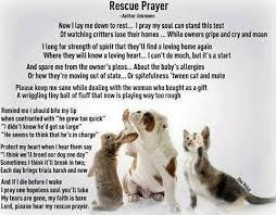 pet prayer adoption rescue prayer animal shelter inc of sterling