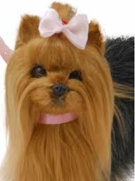 pet dog yorkie puppy duchess outlet