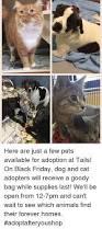 black friday pet adoption 25 best memes about friday dog friday dog memes