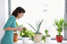 houseplant insect pest problems be aware of these bugs