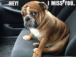 Miss You Meme - 17 of the best i miss you memes top mobile trends