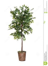download house tree plant solidaria garden