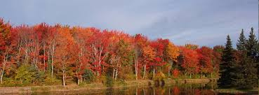 fall colored trees cover fall tree pictures fall tree