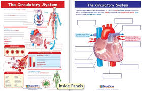 hd wallpapers free circulatory system worksheets for kids