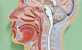Human Anatomy And Physiology Terminology Medical Terminology A Word Association Approach Online Course
