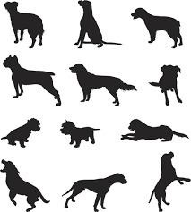 Types Of Dogs Descriptions Of The Different Types Of Retrievers
