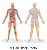 Human Anatomy Images Free Download Anatomy Stock Photo Images 124 160 Anatomy Royalty Free Pictures