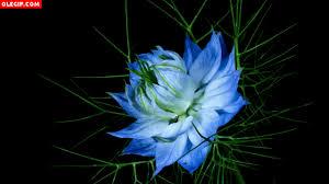 imagenes gif imagenes con movimiento en flor gif find share on giphy