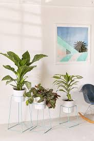 100 best plant for desk mycloud hashtag on twitter home