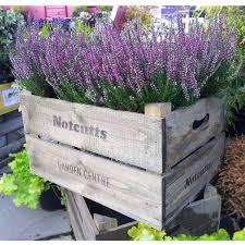 plant pots large u2013 workhappy us