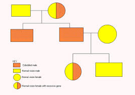 Yellow Red Color Blindness A Graph A Day Colorblindness Pedigree Chart