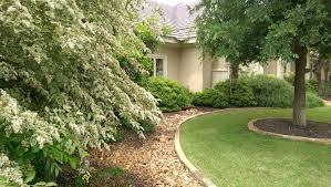 lawn service commercial lawn lawn care pet friendly lawn