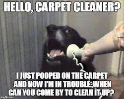 Carpet Cleaning Meme - natural carpet cleaning home facebook