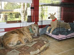 crochet critters u003d homes4hounds new crocheted greyhound u0026 dog