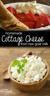 Cooking Cottage Cheese by Homemade Cottage Cheese From Raw Goat Milk Traditional Cooking