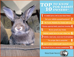 Rabbit Hutch For 4 Rabbits Top Ten Things To Know House Rabbit Society