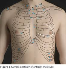 clinical examination of the chest wall