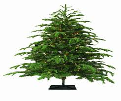 sam u0027s club 9 foot christmas tree best images collections hd for