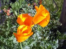 spring rain flowers in the high desert high desert blogging