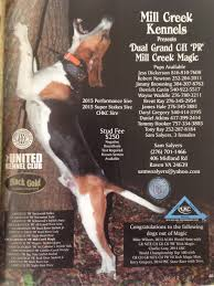 bluetick coonhound forums ukc forums at stud dual grand mill creek magic