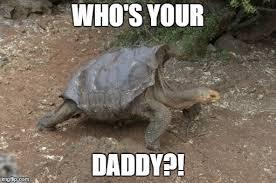 Tortoise Meme - diego the galápagos tortoise album on imgur
